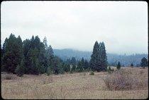 Image of DH3919 - Cedar Knoll Grove