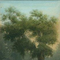 Image of CAMBRIDGE ELM TREE WATERCOLOR
