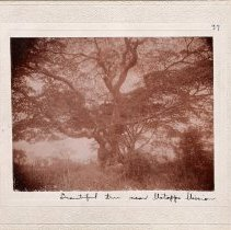 Image of Africa-02-021-49 - Print, Photographic