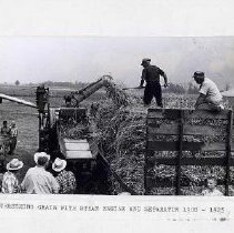 Image of Threshing grain with steam engine and seperator