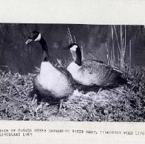 Image of Pincombe's Wildlife Sanctuary 1965