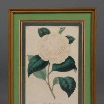 Image of Print - Bernard Léon (design/paint), G. Severyns (litho)