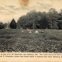 Image of 2007.123.1.118 - Postcard