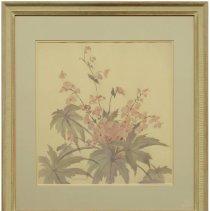 Image of Begonias