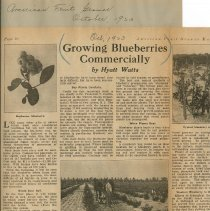 Image of Growing Blueberries Commercially