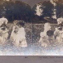 "Image of ""...Field. Sweet Flowers of the Rural."" - 1905"