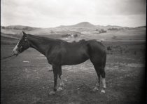 Image of 2004.2.98.593 - Negative, Glass-plate