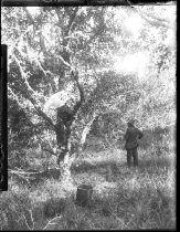 Image of 2004.2.99.239 - Negative, Glass-plate