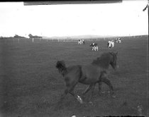 Image of 2004.2.99.438 - Negative, Glass-plate