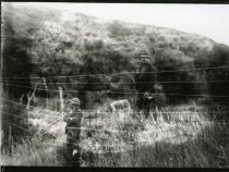 Image of 2004.2.99.130 - Negative, Glass-plate