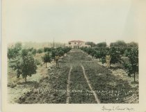 Image of 1988.067.008 - H.A. Manly orchard