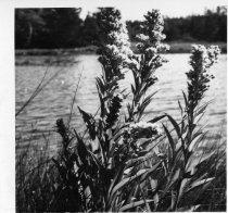 Image of 000-425-3509 - Print, Photographic