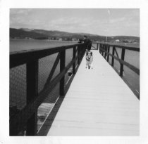Image of Collie on a Pier, by LaRue Spiker