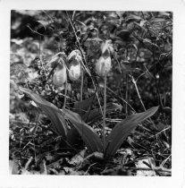 Image of 000-642-3725 - Print, Photographic