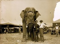 Image of CWi 1406 - Al G. Barnes Circus