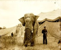 Image of CWi 1407 - Al G. Barnes Circus