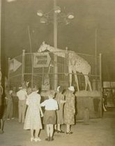 Image of CWi 3137 - Ringling Bros and Barnum & Bailey Circus