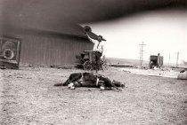 Image of CWi 4066 - Robbins Bros. Circus