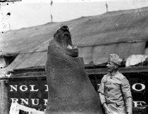 Image of CWi 1169 - Sea Elephant
