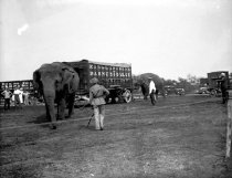 Image of CWi 1227 - Ringling Bros and Barnum & Bailey Circus