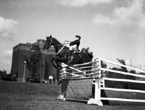 Image of CWi 462 - Jumping Horses