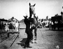 Image of CWi 543 - Riding habit