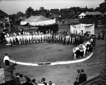 Image of CWi 437 - Liberty Horses in an Ouutdoor Ring, Christy Bros. Circus