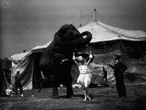 Image of CWi 619 - Rearing elephant