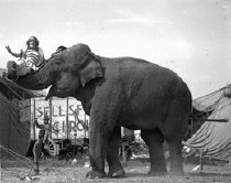 Image of CWi 621 - Elephants and performer