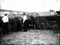 Image of CWi 624 - Sells Floto Circus Elephants