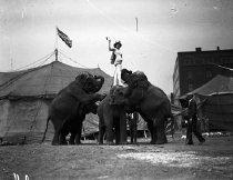 Image of CWi 625 - Sells Floto Circus elephants