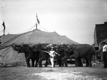 Image of CWi 638 - Sells Floto Circus Elephants