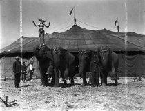 Image of CWi 644 - Saluting Elephants