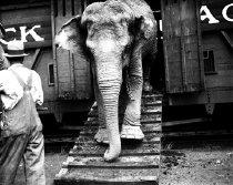 Image of CWi 648 - Unloading Elephant