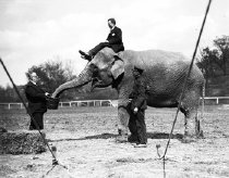 Image of CWi 651 - Watering Elephant