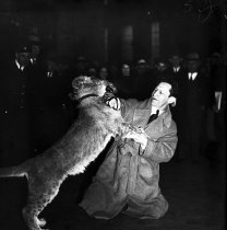 Image of CWi 7 - Clyde Beatty wrestling a lion.