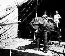 Image of CWi 908 - Elephant and Cart