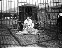 Image of CWi 29 - Bert Nelson kneeling with lion in arena.