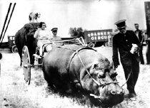 Image of CWi 1247 - Hippopotamus Cart