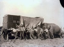 Image of CWi 1537 - Ringling Bros. Circus