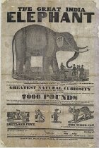 Image of CWi 17152 - Great Indian Elephant