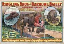 Image of CWi 18386 - Ringling Bros. Barnum & Bailey Circus