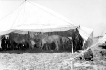 Image of CWi 3049 - Horse Tent