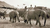 Image of CWi 9049 - Al G. Barnes Circus