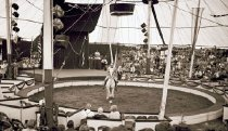 Image of CWi 9461 - Holland Classical Circus