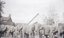 Image of CWi 4442 - Barnum & Bailey Circus