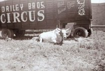 Image of CWi 4460 - Dailey Bros. Circus