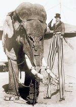 Image of CWi 7125 - Black Diamond (Elephant)