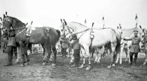 Image of CWi 9576 - Ringling Bros. and Barnum & Bailey Circus