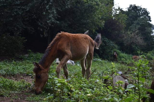caballos pastando